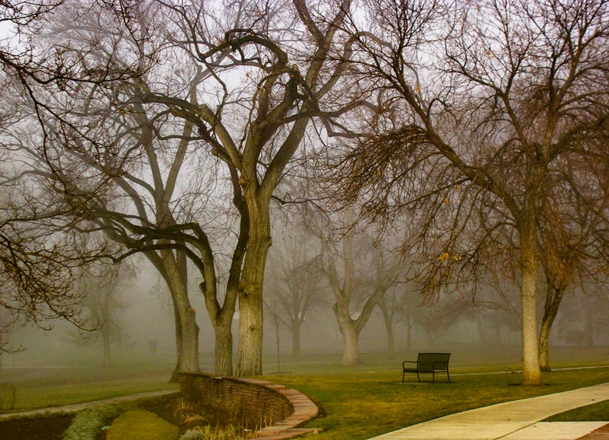 "1st place Nature - ""Bench Mist""- Linda Spadaro"